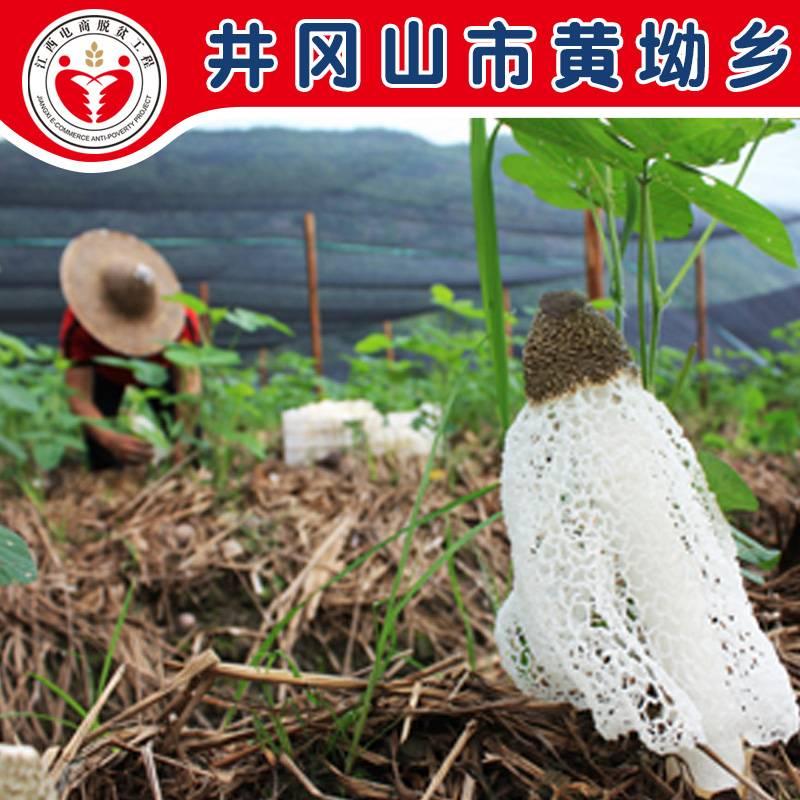 电商公益扶贫  井冈山 黄坳乡 特产竹荪 50g