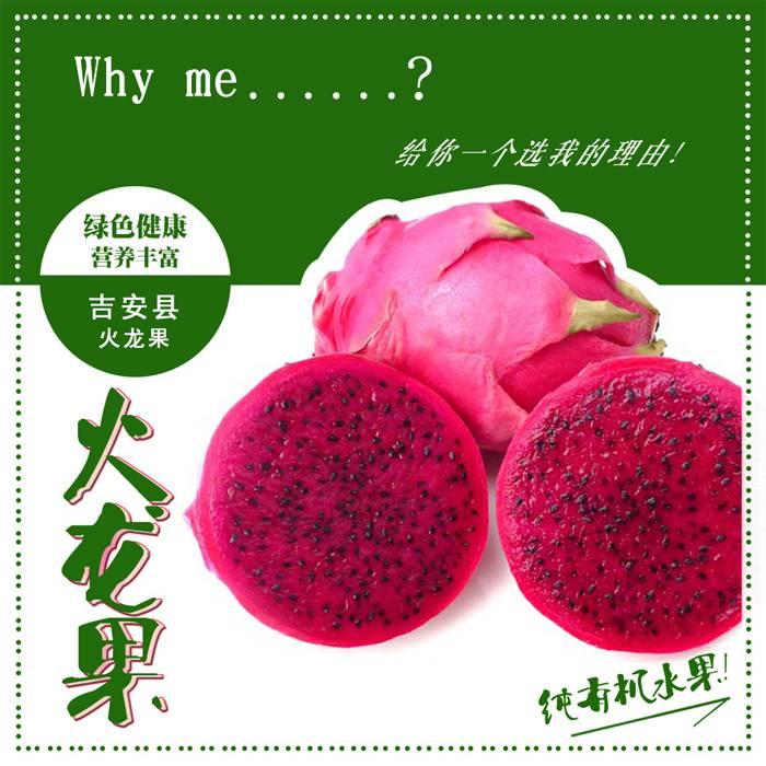 吉安县土特产 敖城红心火龙果 农家自种 有机水果4斤装